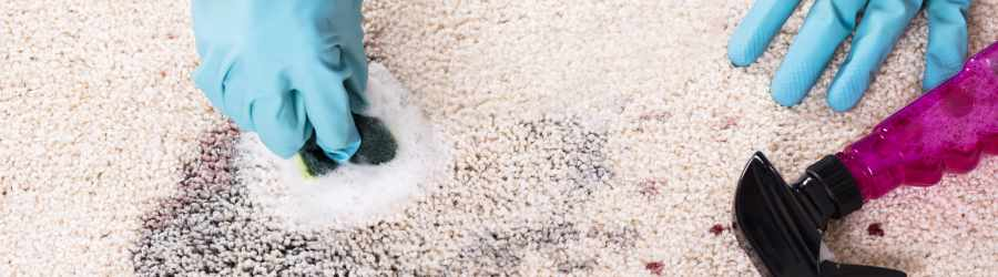 Carpet Cleaning Greenbank Services